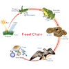 Food web and food chain